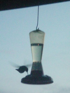 Feeder for the hummers in my  balcony