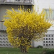 Yellow Bush, I'm home