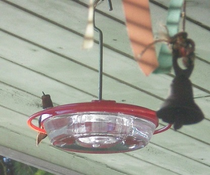 Hummer feeder up on the ceiling