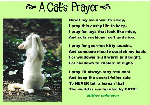 a-cat's-prayer