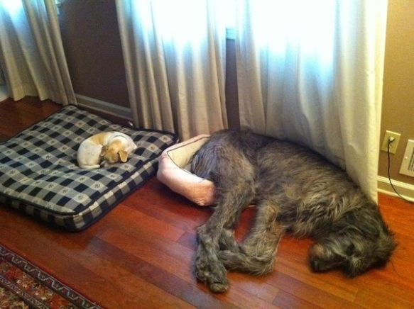 dogs asleep