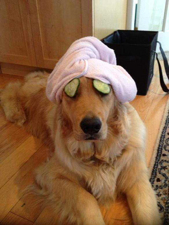 Sophie dog - pamper yourself