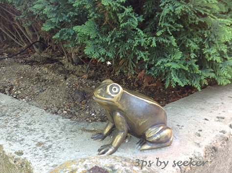 z toad