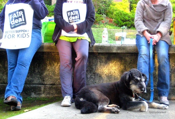 dog wpc therapy