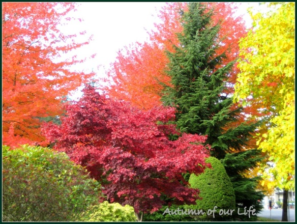 Autumn of our life