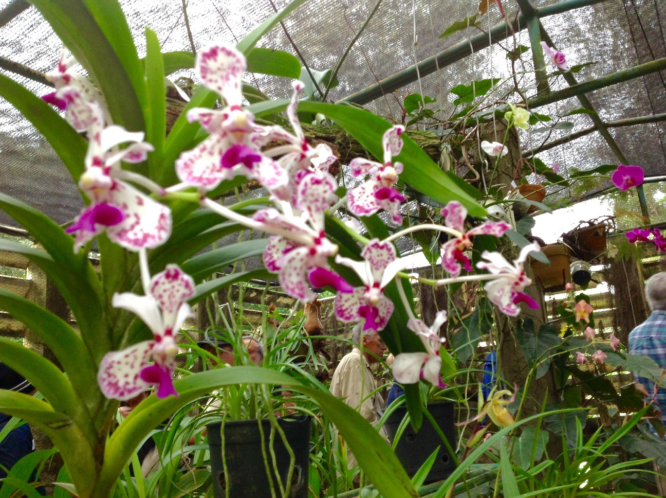 focus-on-orchids