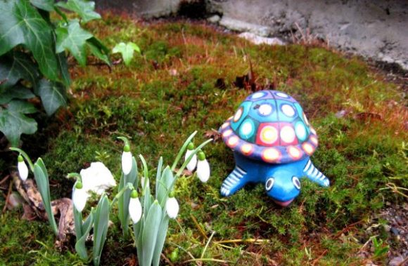 Turtle and Snowdrops