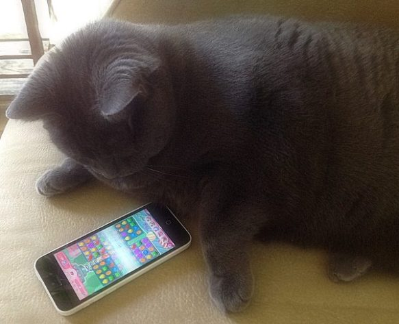 Lucy Candy Crush