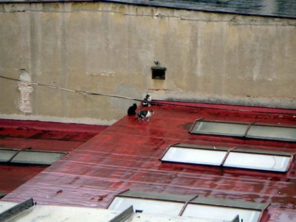 Cat on the roof - Italy